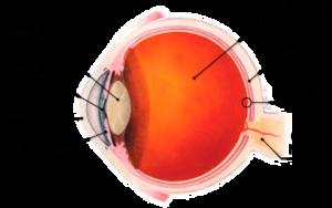 Macular Degeneration Raleigh Retina Specialist Clayton
